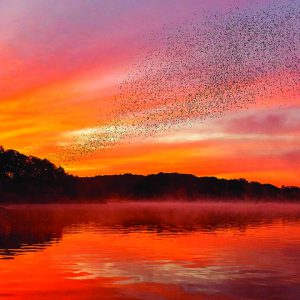 Birds fly at sunset on the Connecticut River